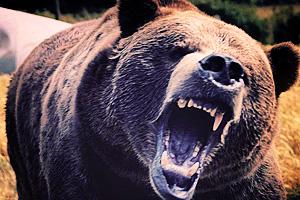 В Петербурге на пожилую женщину напал медведь