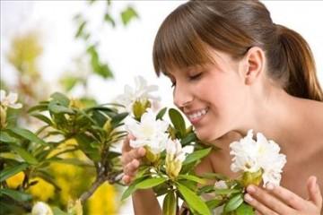5 растений для обеззараживания воздуха в вашей квартире