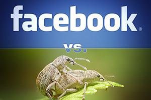 Британским интернет-пользователям Facebook нравиться больше чем порносайты