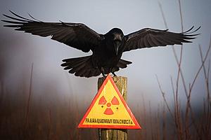 Чернобыльская катастрофа. 25 лет спустя