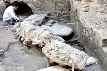 Найдены останки 18-метрового мегалодона