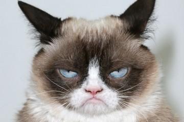 """У кошек только три основных выражения """"лица"""""""