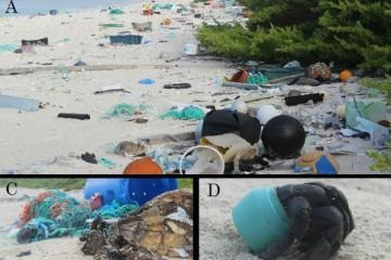 Пластиковый мусор добрался до самых девственных уголков Земли