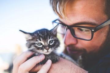 Кошачья клиника Дублина ищет «обнимателя» на полный рабочий день
