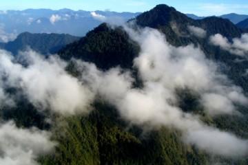Высочайшие деревья мира могут расти в горах