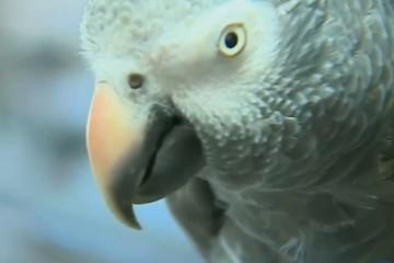 Попугай впервые в США предстанет перед судом