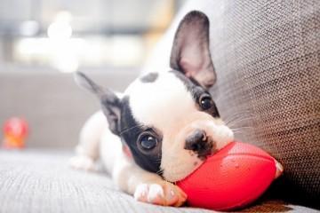 Картинки со щенками могут вернуть семье счастье