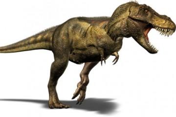"""Почему тиранозавр был """"хромой уткой"""""""