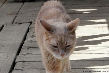 На Аляске скончался кот-градоначальник