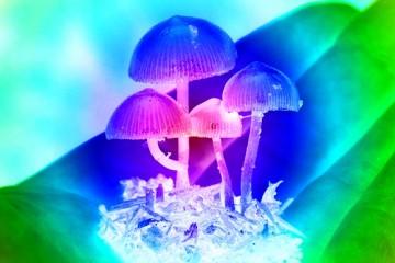 Раскрыта тайна «волшебных грибов»