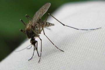 Твиттер навечно забанил пользователя за убийство комара