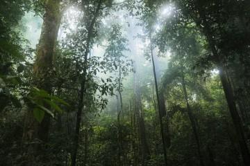 Леса стали выделять больше углерода, чем кислорода