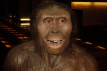 Предком людей и человекообразных обезьян был гном