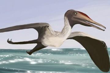 Птицы и птерозавры были друзьями, а не врагами