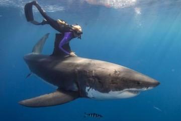 Предок акул и людей жил в девонском периоде