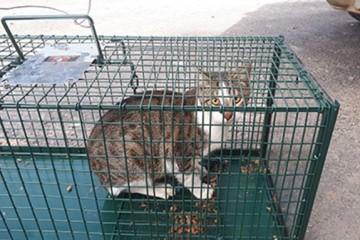 В Тель-Авиве остановили железную дорогу, чтобы найти сбежавшего кота