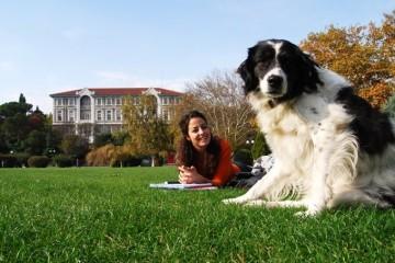 Собаки снимают студенческий стресс