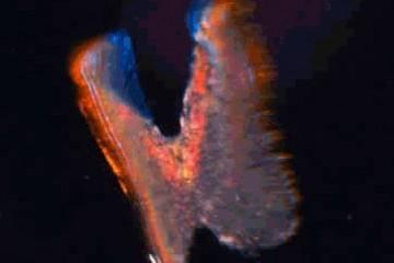 Биоробот на платформе «сердце на кристалле»