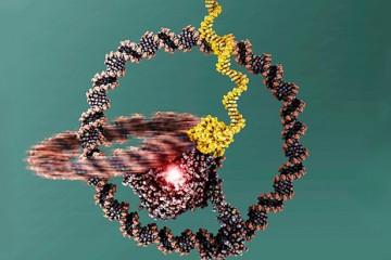 Одноколёсный нано-велосипед сделан из ДНК