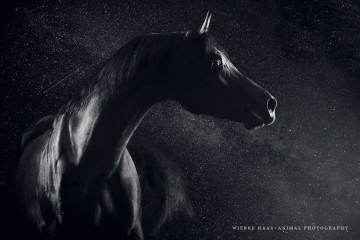 В США лошадь выиграла суд против бывшего хозяина