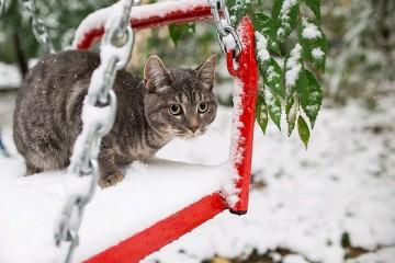 Москва этой ночью замерзнет