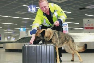 Во Франкфуртском аэропорту появилась команда охотников на клопов