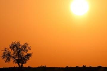 Планету ждут пять лет жары