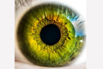 Революция в борьбе за зрение: ученые создали искусственную графеновую сетчатку