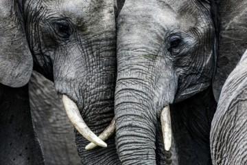 ИИ против браконьеров Центральной Африки