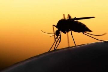 Пластик по планете разносят комары