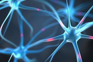 Нервные клетки стали восстанавливать