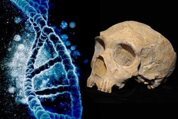 Гены неандертальцев защищают европейцев от вирусов