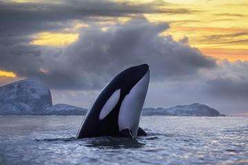Люди поставили под угрозу полного вымирания еще один вид дельфиновых