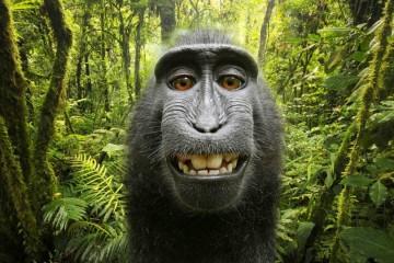 Доброта продлевает жизнь даже обезьянам