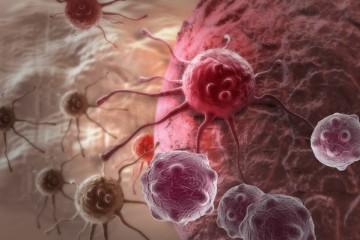 Почему крупные люди более склонны к раку?