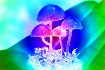 Микродозы «волшебных грибов» помогают творчеству