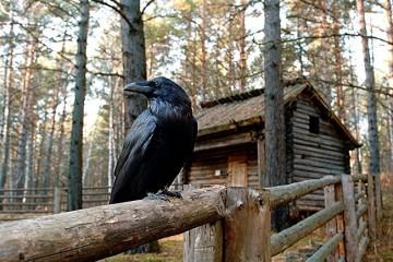 Никогда не заходите в одинокие избушки в лесах России!