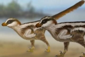 В Южной Корее обнаружены микродинозавры