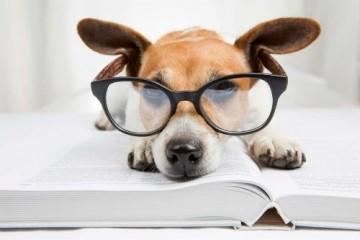Психологи выяснили, что собаки не умнее кошек