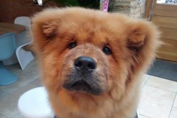 Британский щенок, покусившийся на стража порядка, отбыл срок и вышел на свободу