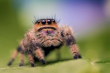 Учёные обнаружили млекопитающих пауков