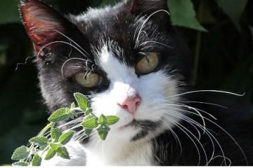 Почему кошки так любят валерьянку?