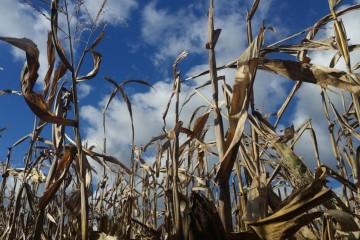 10 лет успехов сельского хозяйства РФ оказались 30%-ной «липой»