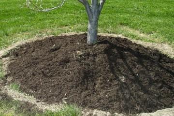 Кто захочет после смерти превратиться в компост?