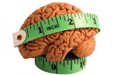 Размер мозга влияет на вкусовые ощущения