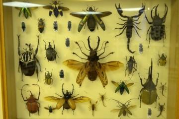 Через 100 лет на Земле по нашей милости может совсем не остаться насекомых
