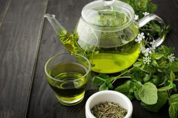 Ученые избавили мышей от кучи проблем с помощью зелёного чая