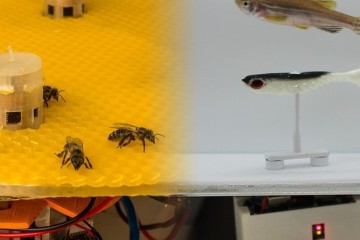 Роботы наладили контакт между пчелами и рыбами