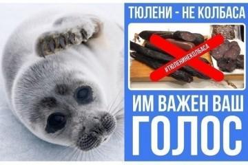 Более 117 тысяч россиян выступили против производства колбасы из тюленей