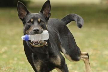 Собаки научились убирать мусор за людьми
